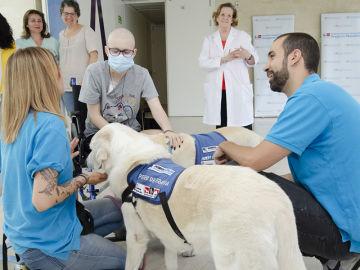 El Hospital Gregorio Marañón realiza terapias con perros para ayudar a niños hospitalizados