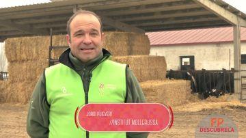 Técnico Superior en Producción Agropecuaria