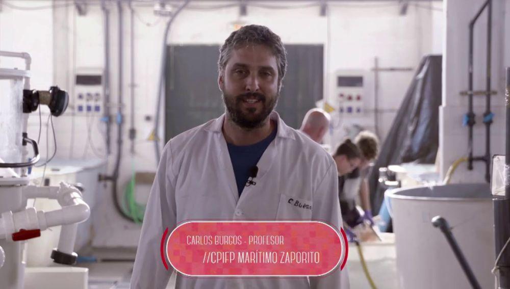 Técnico en Acuicultura