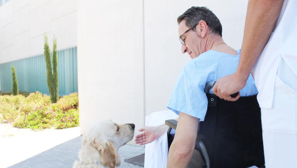Hospitales de Alicante permiten la visita de mascotas para ayudar a los pacientes ingresados