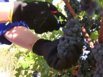 Más de 200 alumnos de FP estudian viticultura en Madrid
