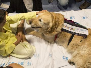 El Hospital 12 de Octubre demuestra que la terapia asistida con perros reduce  el dolor y la ansiedad en niños ingresados