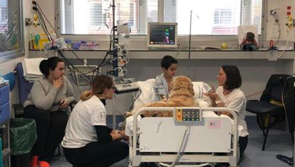 Terapia con perros en el Hospital 12 de Octubre