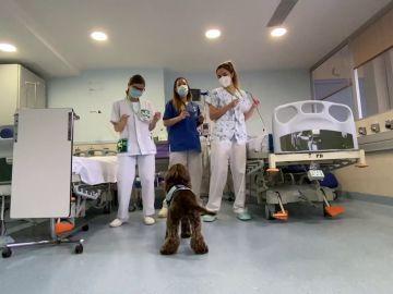 Besos caninos desde el Hospital Germans Trias i Pujol